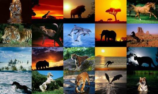 animalspeciesdownpandacom