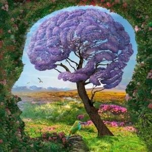 braintreeanimationexpandedconsciousnessblogspot