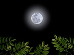 moonleaves.php