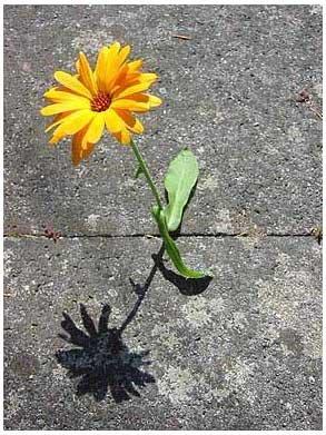 flower-concrete-Markus-Jerko