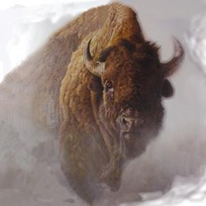 buffaloinsnow